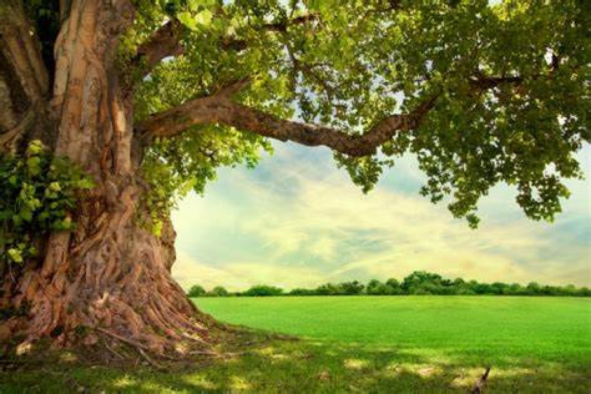 (ISO 14001:2015) Environmental Management Systems Programs